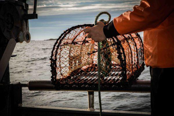 Hummerfiske Fiskebäckskil. Kortfilm om hummerpremiären.